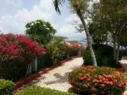 Ocean Front Snorkeling Paradise at Spanish Lagoon Home Rental in Savaneta 2 - thumbnail