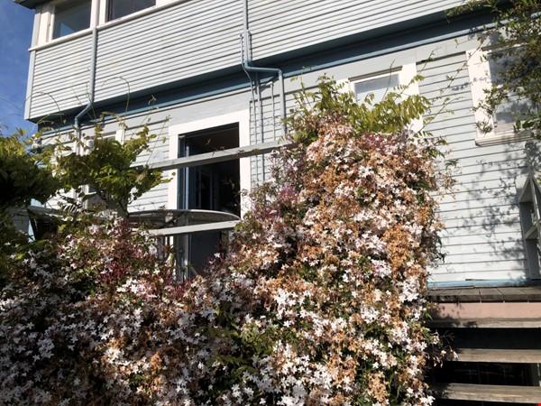 Beautiful Victorian duplex walking distance to UC Berkeley! Home Rental in Berkeley 9 - thumbnail