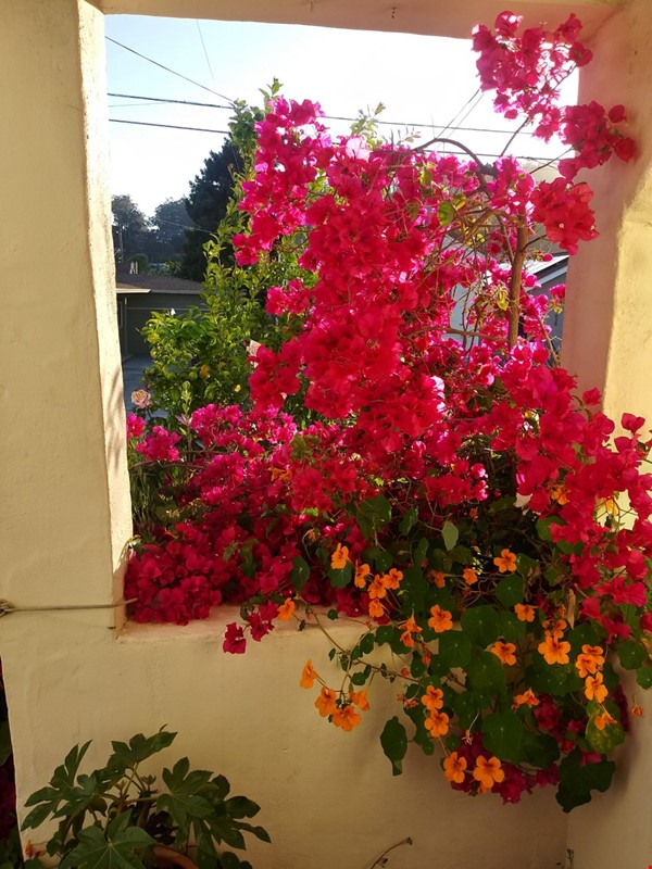 Beautiful small house in Berkeley annex, separate work studio, private  garden 10 minutes from U.C. campus Home Rental in Albany 9 - thumbnail