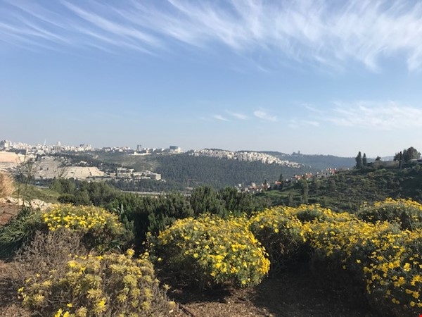 Beautiful house in Mevaseret Zion, 15 min from Jerusalem Home Rental in Mevaseret Zion 1 - thumbnail