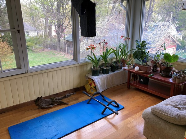 Two-Bedroom Apartment on Quiet Street; Walkable to Everything Northampton Home Rental in Northampton 3 - thumbnail
