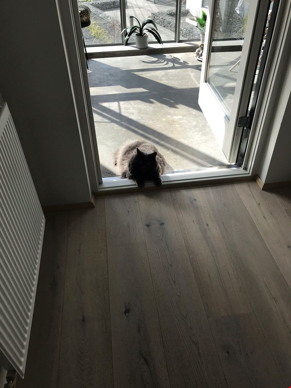 Beautiful and spacious seafront condo in Reykjavik with two cats Home Rental in RVK 8 - thumbnail