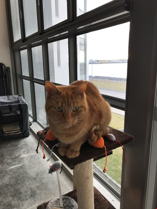 Beautiful and spacious seafront condo in Reykjavik with two cats Home Rental in RVK 9 - thumbnail