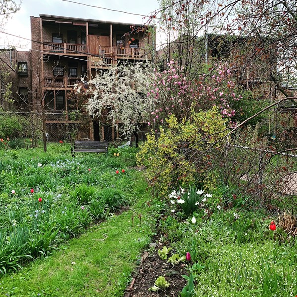 Beautiful Hyde Park Home Near UChicago, Lake, Loop Home Rental in Chicago 3 - thumbnail