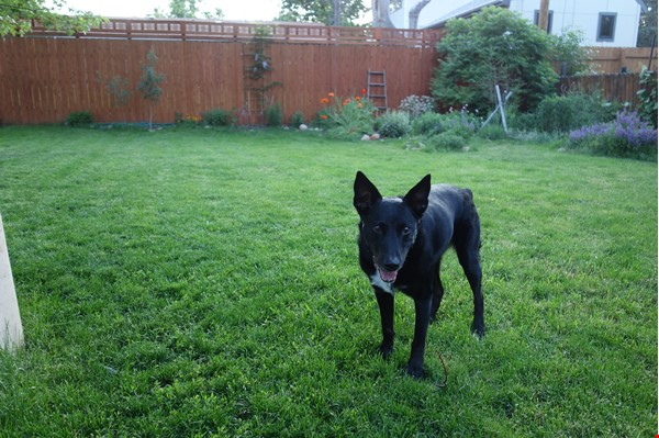 Well-kept house, large yard, pet friendly, walk to CU campus, trails. Home Rental in Boulder 7 - thumbnail