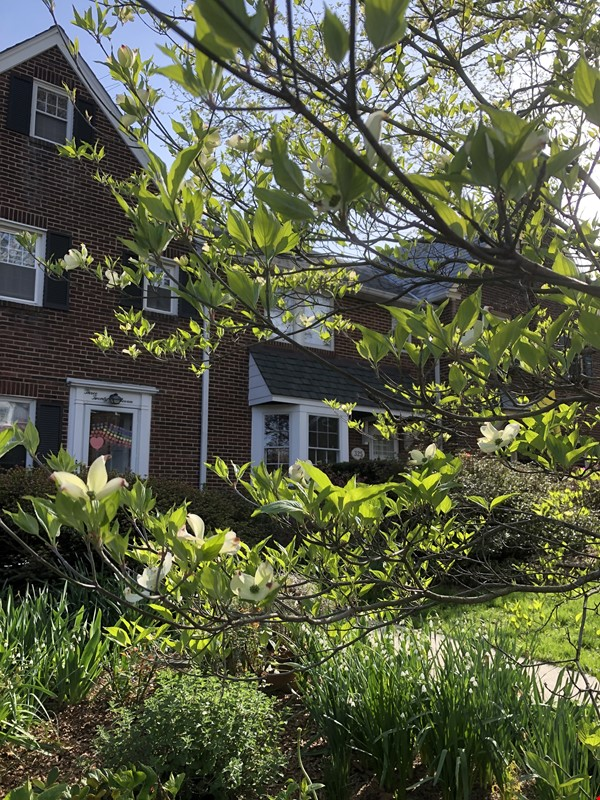 Historic Neighborhood Near Universities Ideal for Cat Lover Home Rental in Baltimore 0 - thumbnail