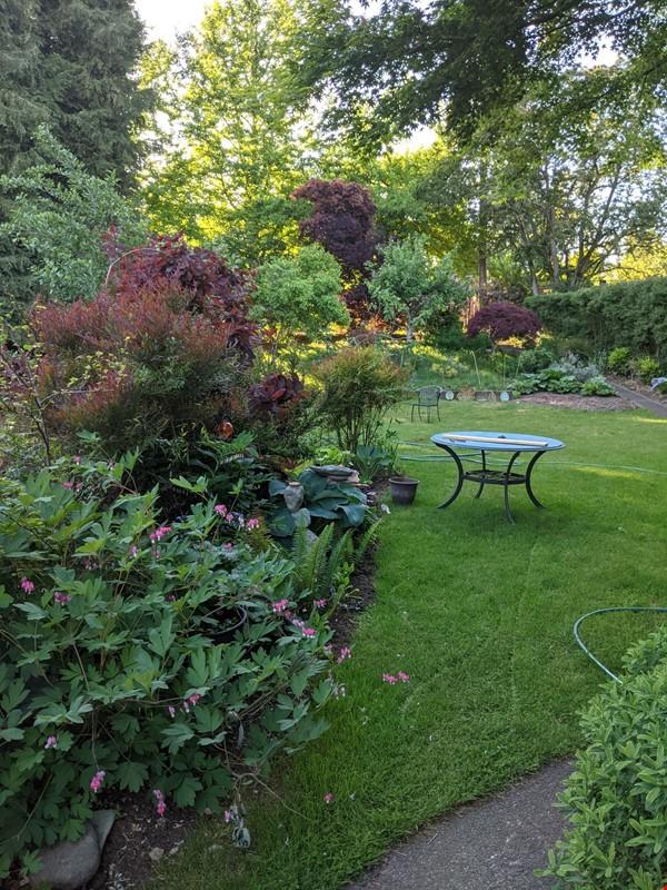 Cozy Fun Ravenna Home Home Rental in Seattle 9 - thumbnail