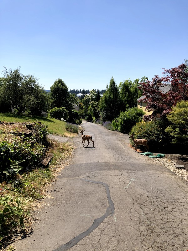 Sunset views and walking lifestyle by UO Campus & forest park. Remodeled Home Rental in Eugene 2 - thumbnail
