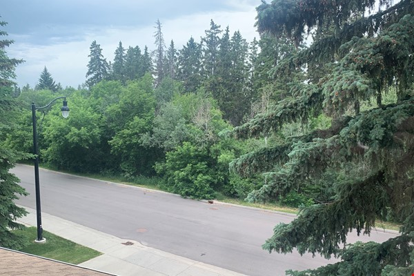 Forest haven sabbatical home Home Rental in Edmonton 0 - thumbnail